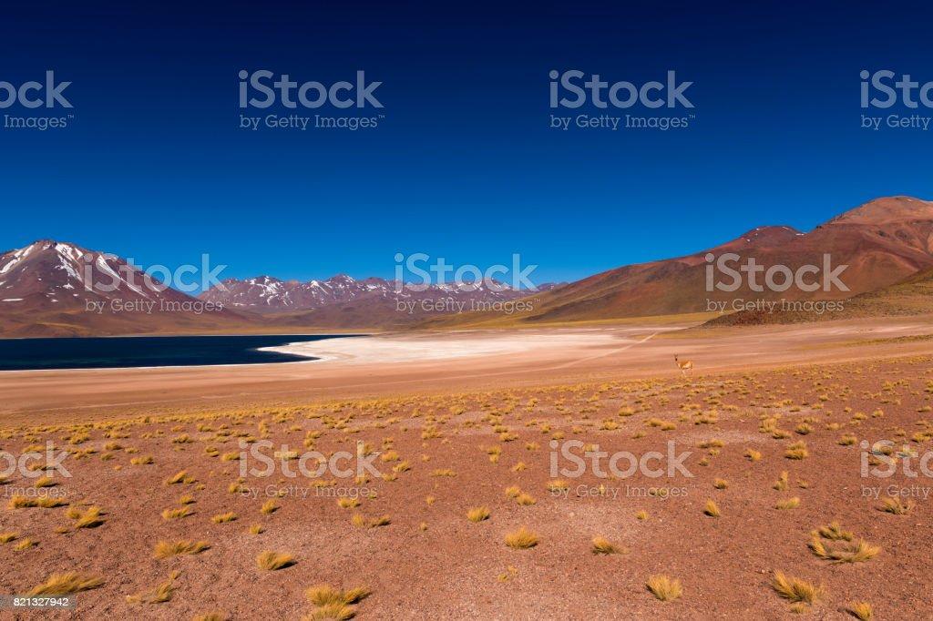 The Miscanti Lake (Laguna Miscanti) with the surrounding mountains and volcano in the Atacama Desert stock photo