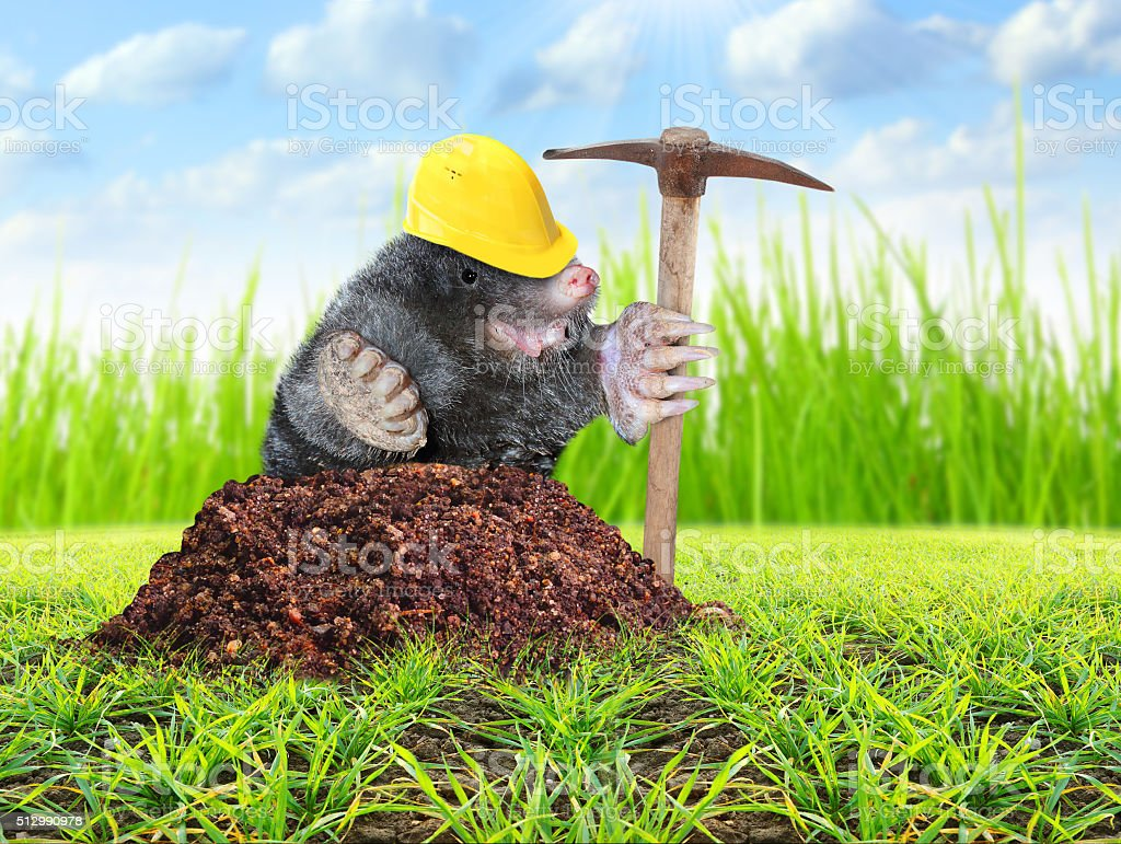 The Mole with pickax. stock photo