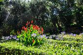 The Monforte Garden - Jardines de Monforte
