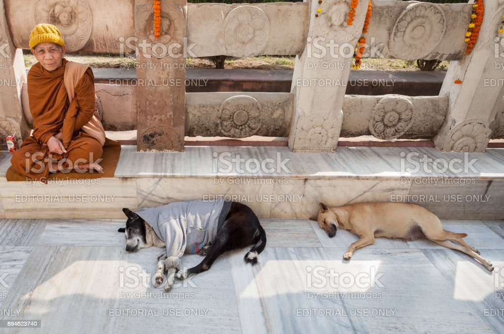 The monk and two sleeping dogs at Mahabodhi Temple. stock photo