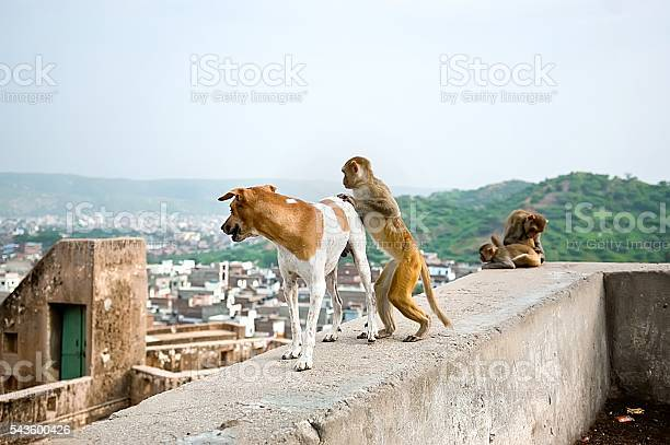Free Dog Sex Images, Pictures, And Royalty-Free Stock Photos - Freeimagescom-5492