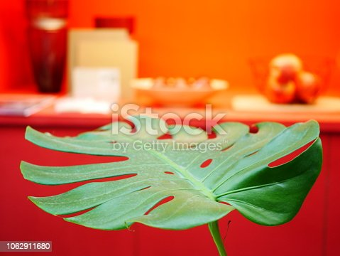 175407085istockphoto The monstera leaf in red room 1062911680