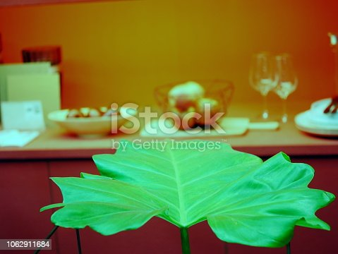 175407085istockphoto The monstera leaf in red room 1062911684