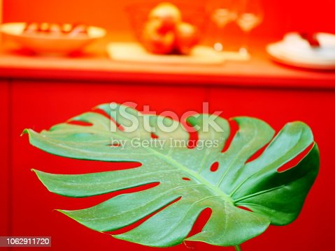 175407085istockphoto The monstera leaf in red room 1062911720