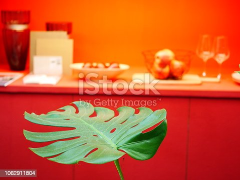 175407085istockphoto The monstera leaf in red room 1062911804