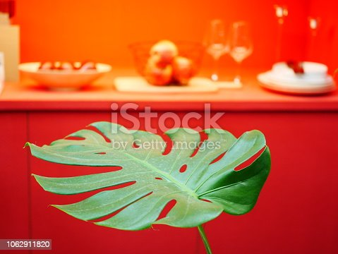 175407085istockphoto The monstera leaf in red room 1062911820