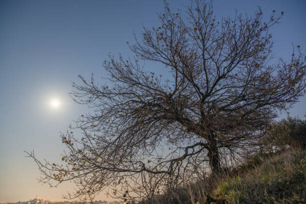 the moon and the tree – zdjęcie
