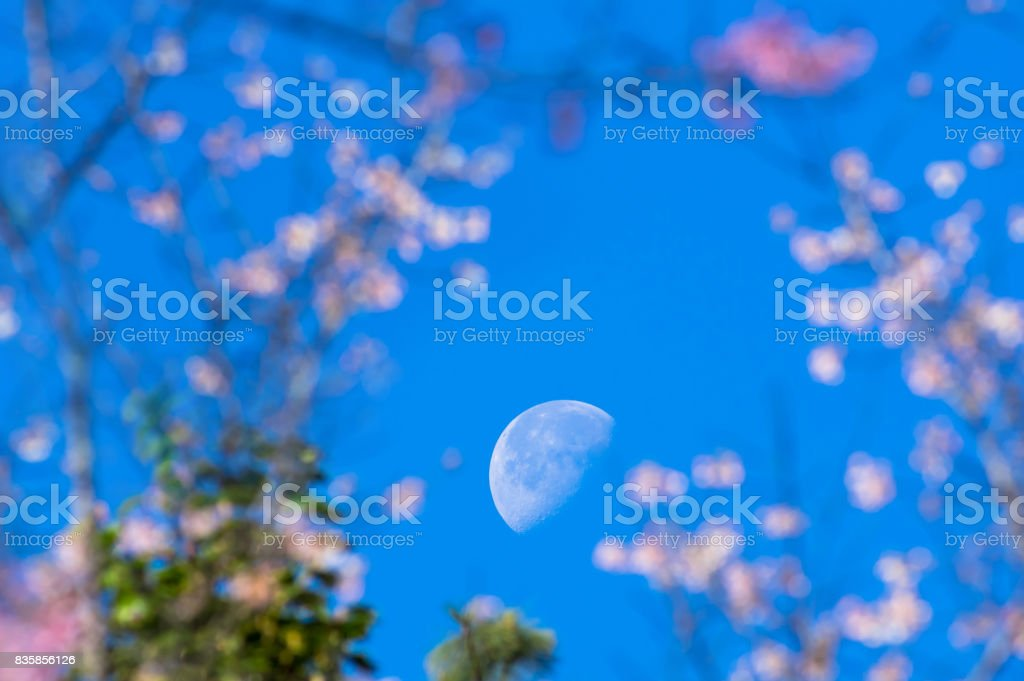 The moon on blue sky stock photo
