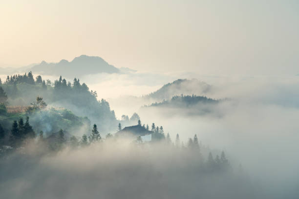the morning mist - trees in mist stock pictures, royalty-free photos & images