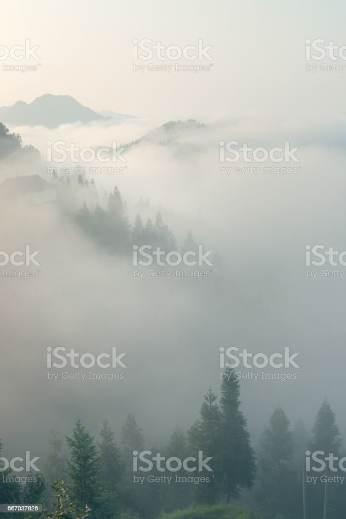 The morning mist stock photo