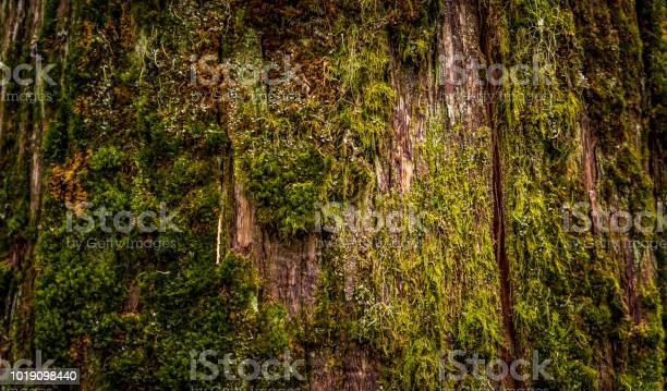 Photo of The moss covered cracked tree
