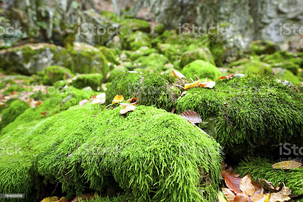 The moss royalty-free stock photo
