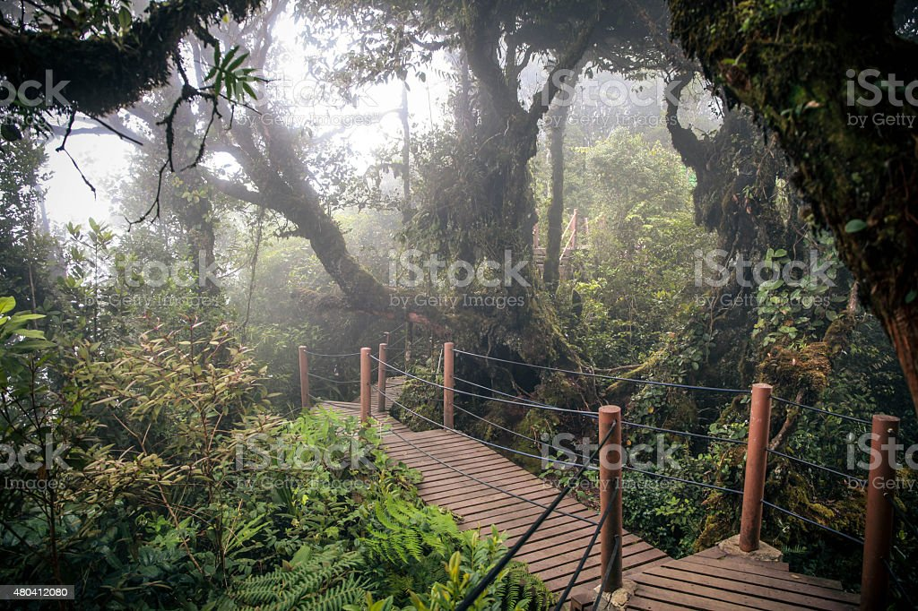 The Mossy Forest @ Cameron Highland stock photo