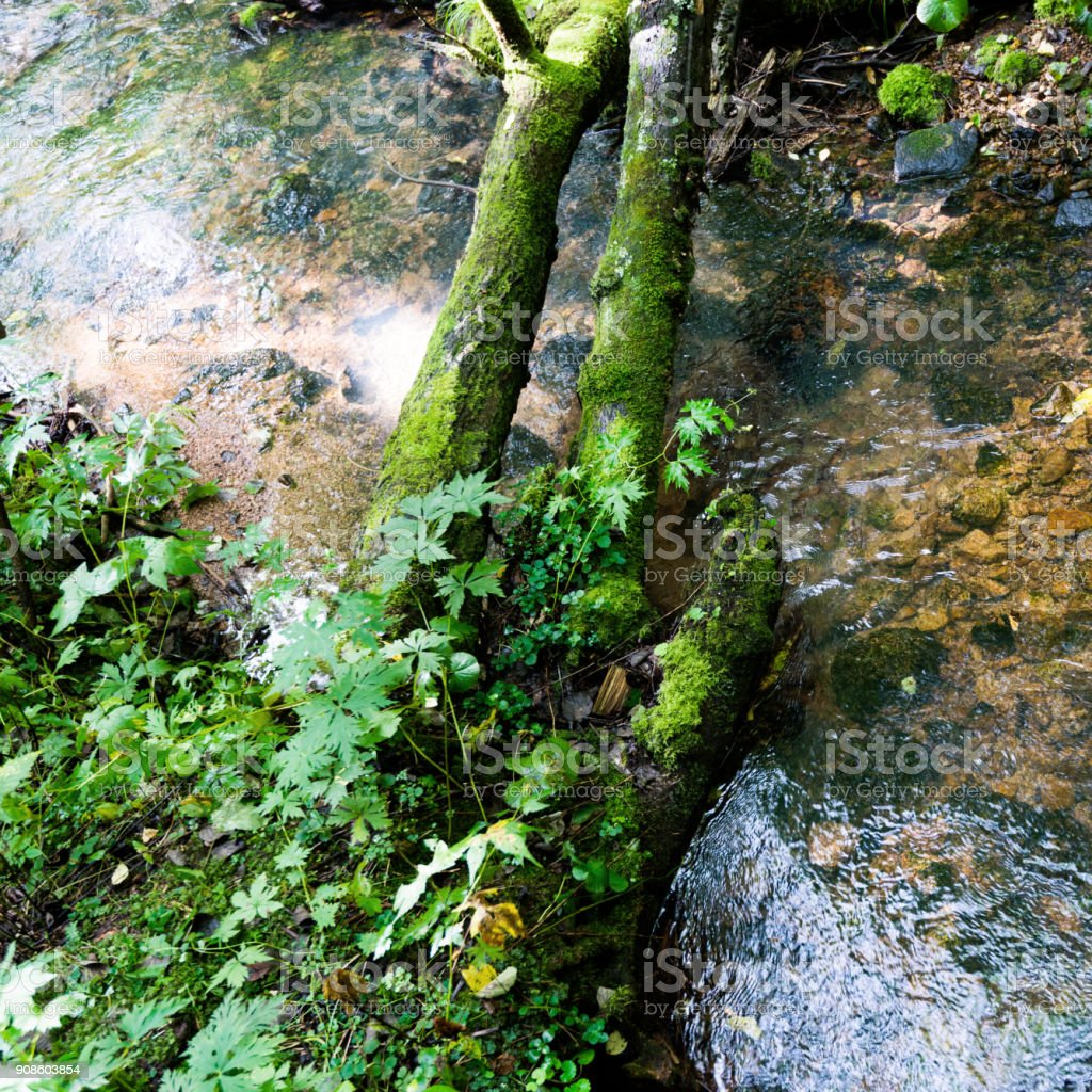 The mossy wooden bridge in the forest river stock photo