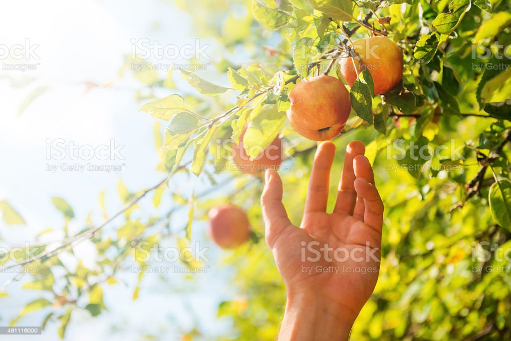 The most juicy and ripe. stock photo