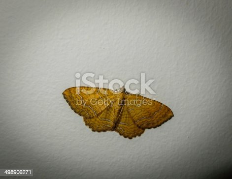 istock The moth 498906271