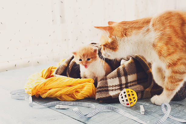 The mother cat comes to kitten picture id533457398?b=1&k=6&m=533457398&s=612x612&w=0&h=zpgizljv5k9ht1b4b4xa4d c2g8klwtft3zto0fxb9c=