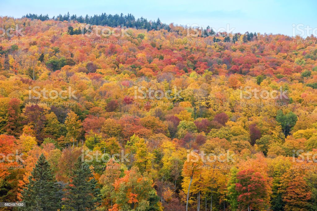 The mountain colorful autumn landscape. foto stock royalty-free