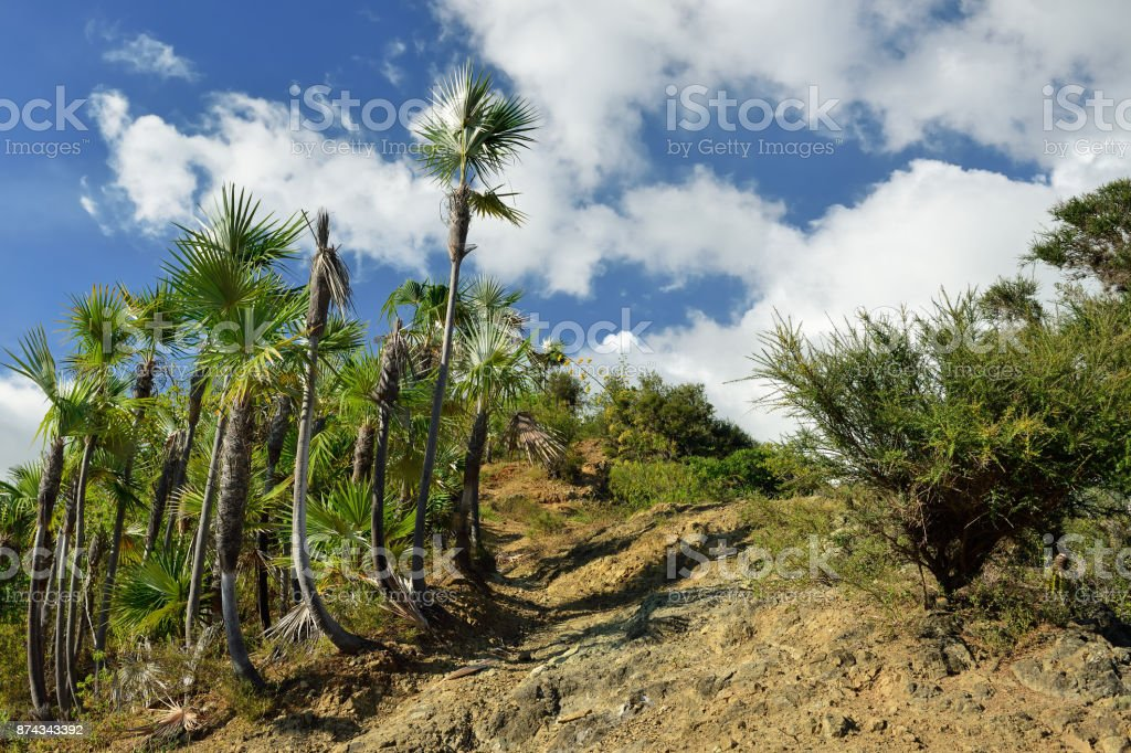 The mountains Sierra Maestra on Cuba stock photo