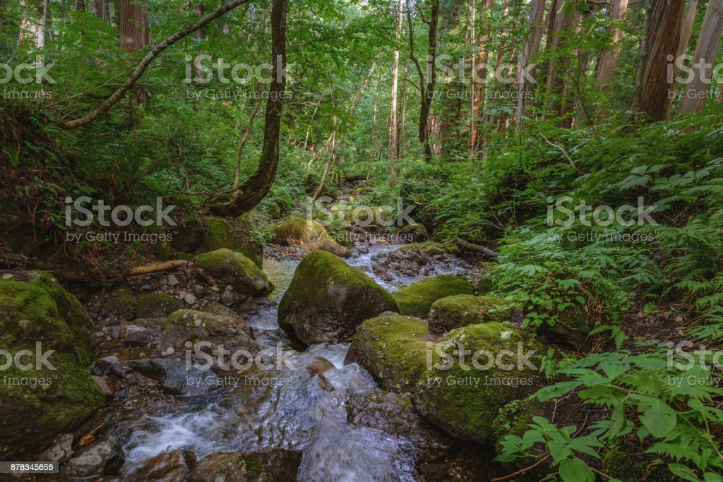 The murmur of a stream in the forest stock photo
