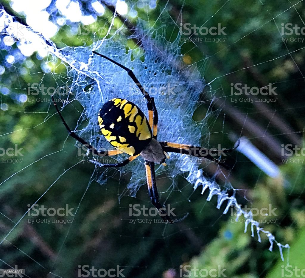 The name spider stock photo