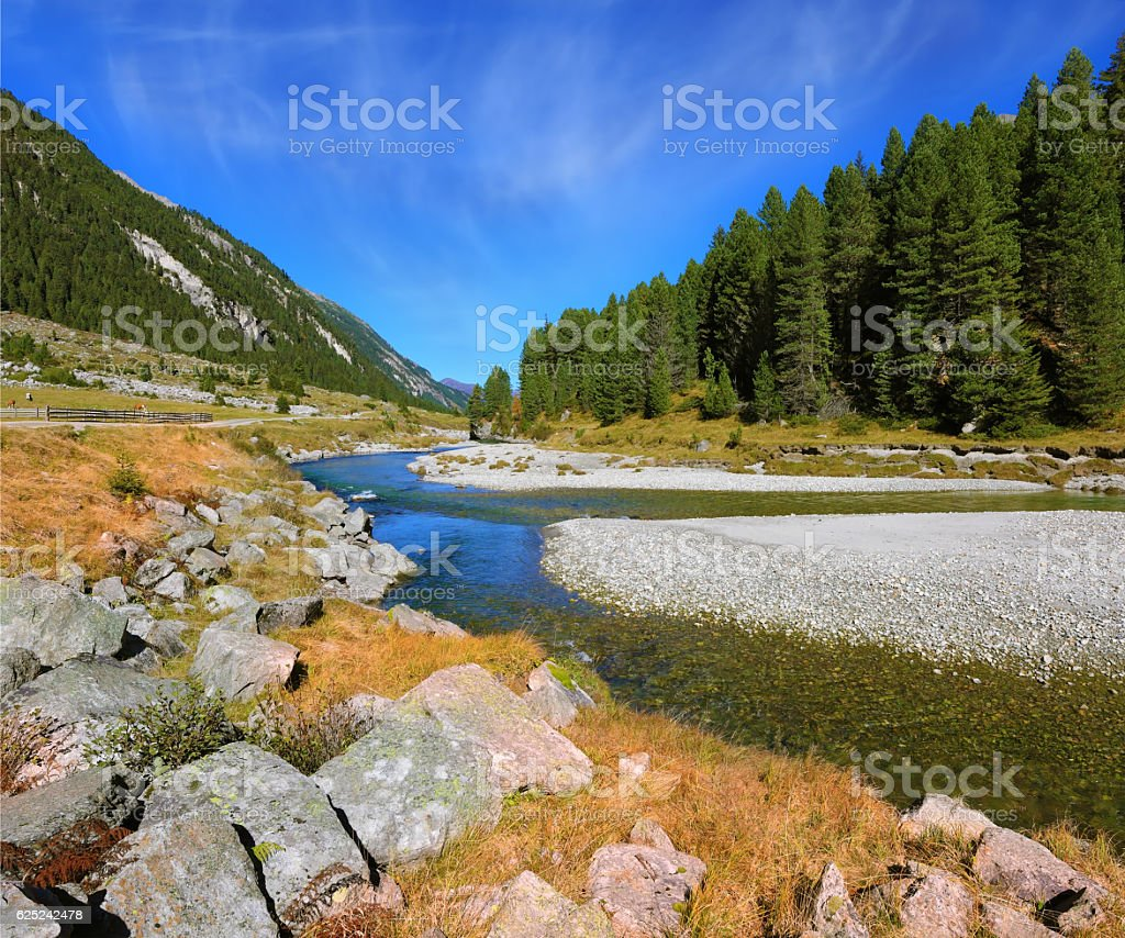 The narrow stream and pine forests stock photo