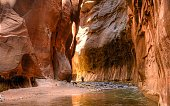 Landscape photo of The Watchman and the North Fork Virgin River at sunset in Zion National Park, Utah, USA.