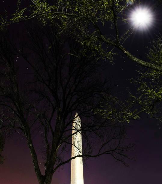 The National Monument Hiding Behind a Tree, with a Full Moon and a Purple Sky stock photo