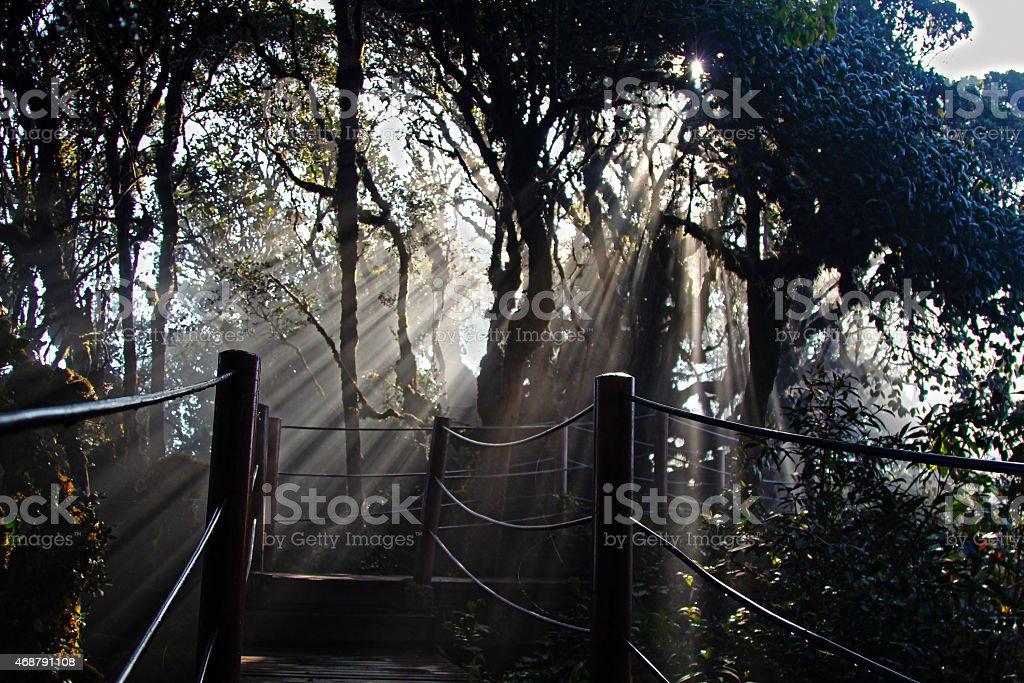 The Natural Lighting stock photo