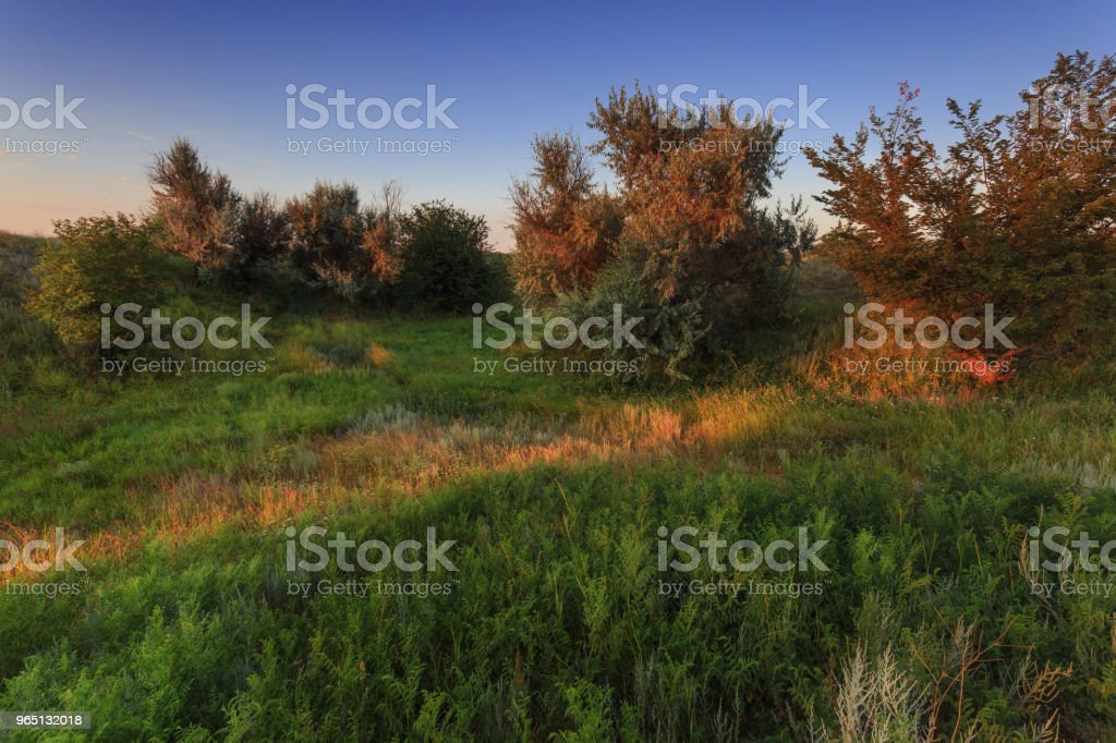 The natural scenery of the Volgograd region. The first rays of the sun shine on the bushes and grass royalty-free stock photo