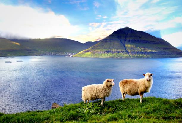 the nature of the faroe islands - faeröer stockfoto's en -beelden