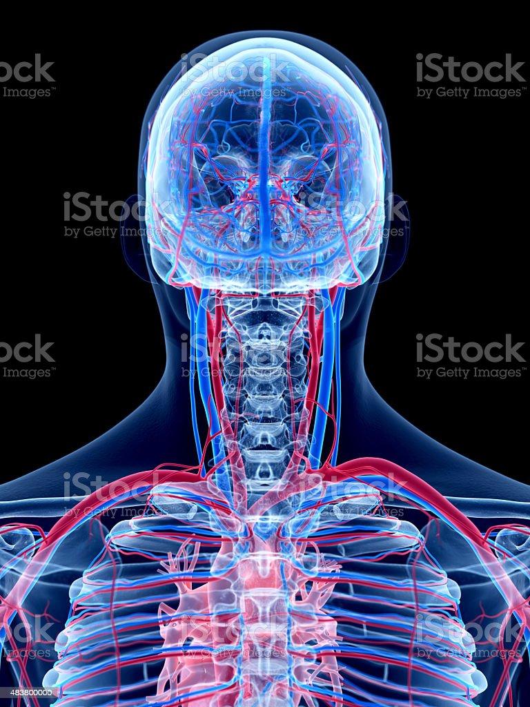 medical ilustración - foto de stock
