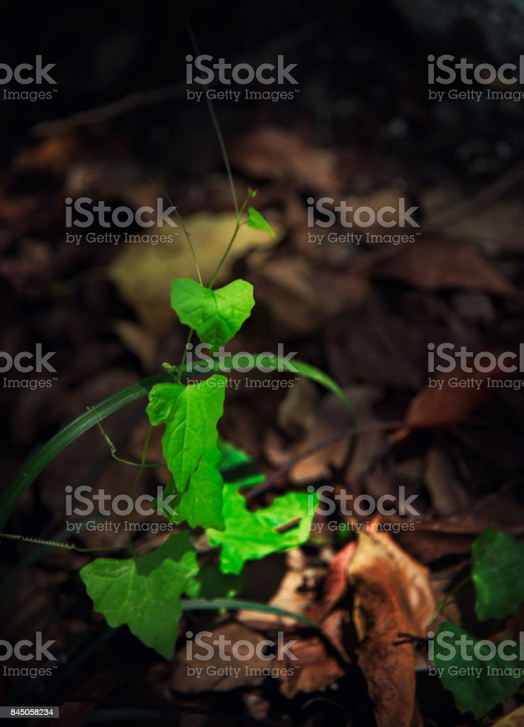 The new buds begin to appear in the spring. stock photo