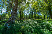The New Forest National Park In the summer with the bright green trees and blue sky