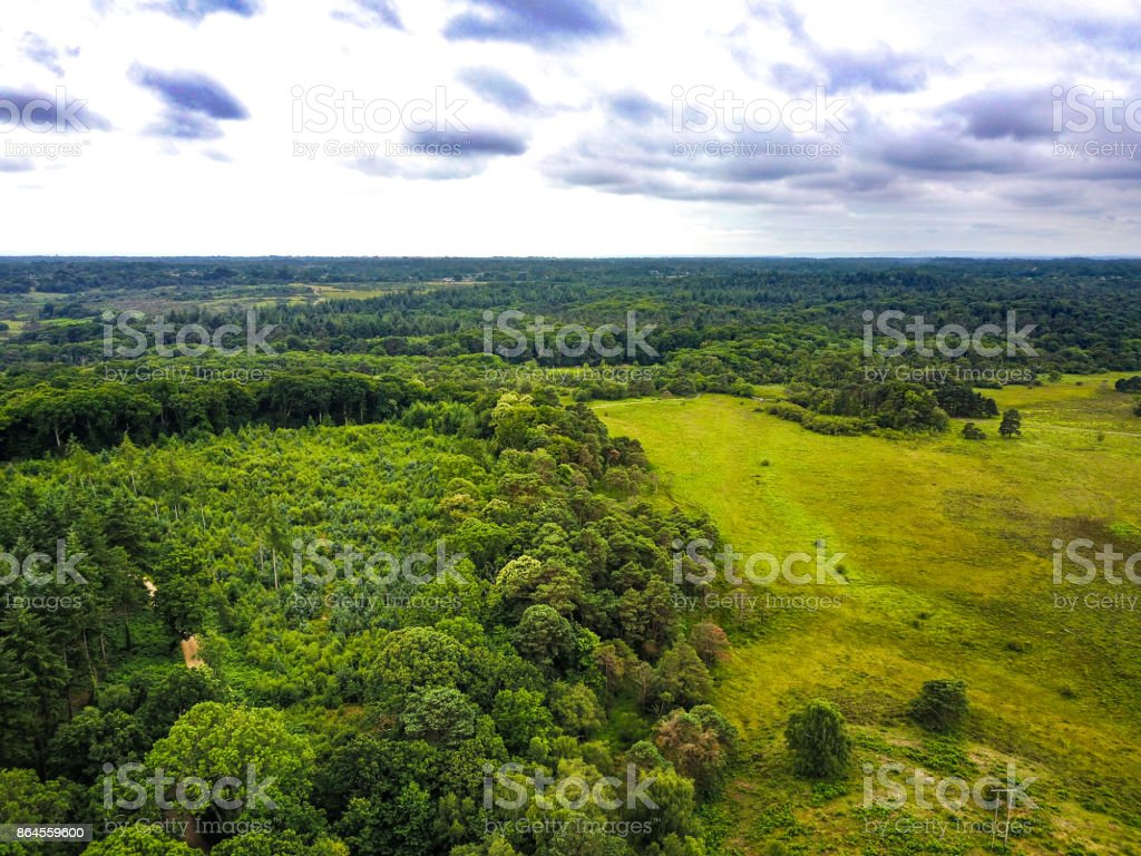 The New Forest National Park. stock photo