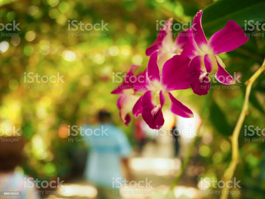 The nice orchid flower stock photo