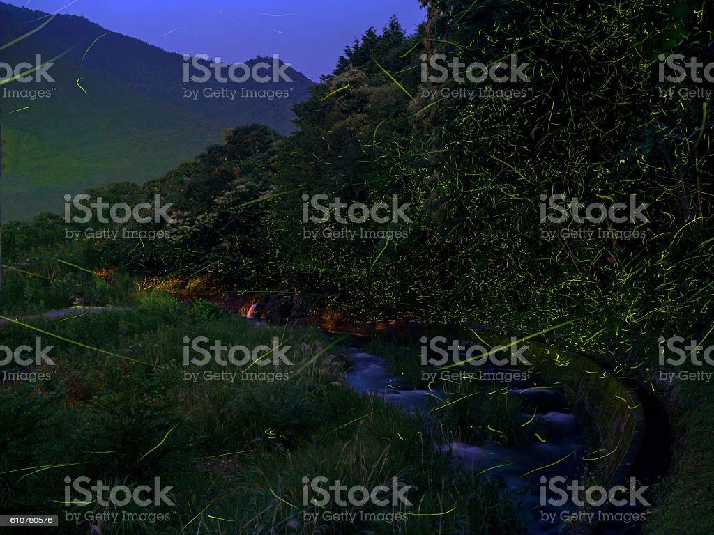 The night of firefly stock photo