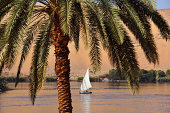 A felucca sail boat on the River Nile at Aswan in EgyptThe point of focus is the palm tree