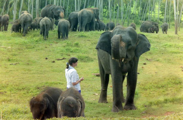 from Micah elephants with women fucking sri lanka