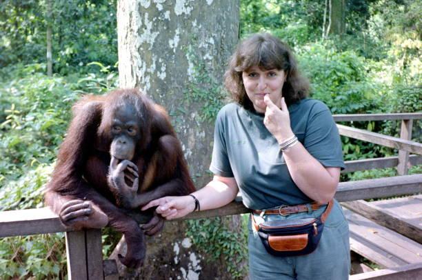 The nineties. Friendship between a fearless young woman and Orangutan. Sandakan, Malaysia. stock photo