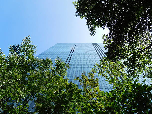The office building under the blue sky through trees – Foto