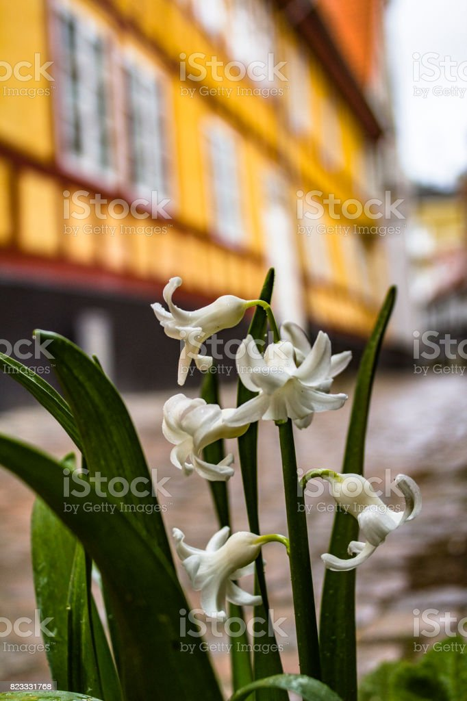 The old city of Aalborg in Denmark stock photo