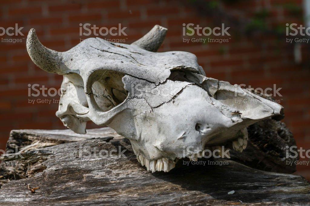 le vieux crâne de l'animal est tombé en dehors de l'heure se trouve sur une souche délabrée contre un mur de brique rouge - Photo de Arbre libre de droits