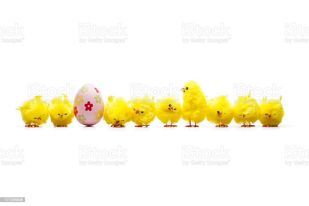 The One - Row Baby Chicken Chick Humor Fun Easter stock photo