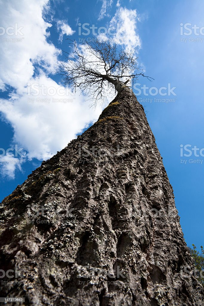 The One-Mile Tree stock photo