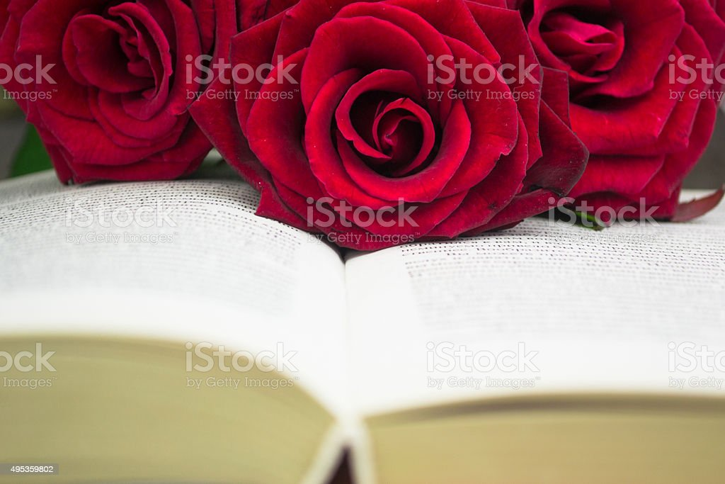 The open book and red roses. Close up stock photo