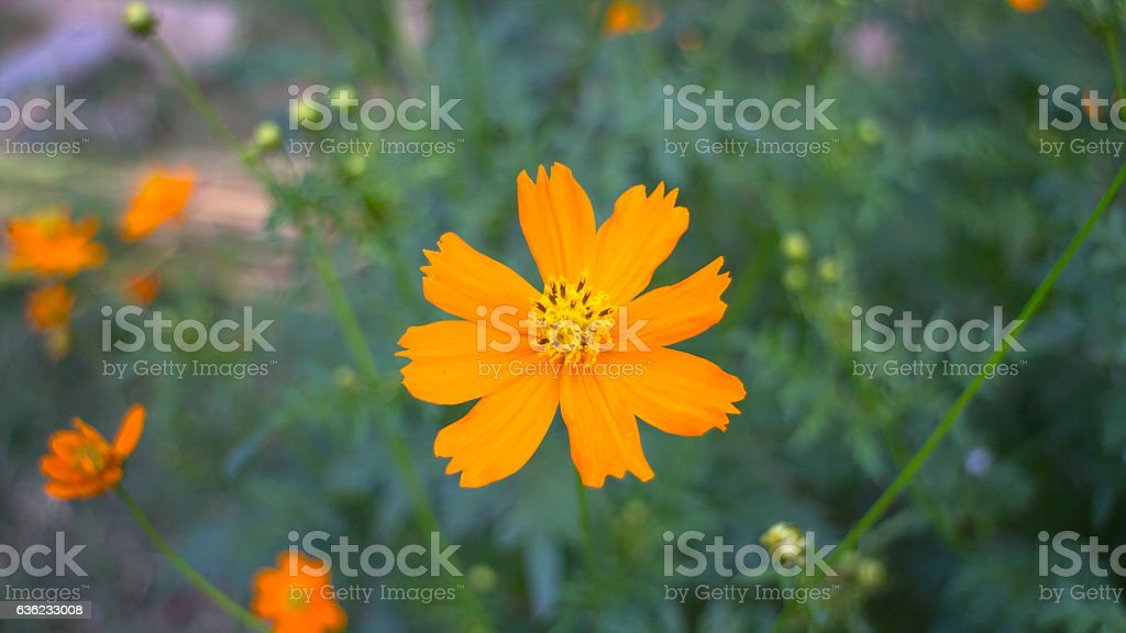 The orange flowers stock photo