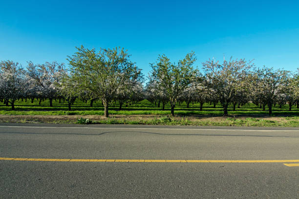 The orchard across the street stock photo