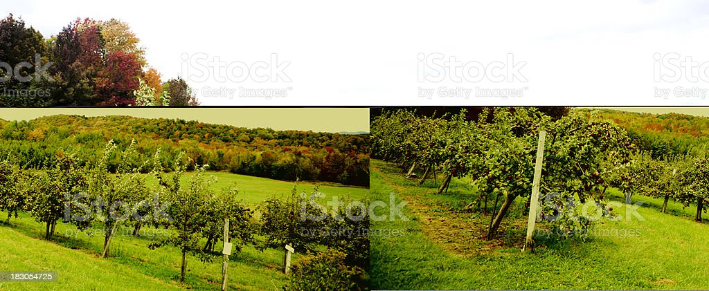 The Orchard royalty-free stock photo