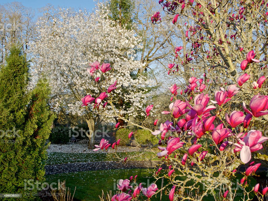 The Oregon Garden Spring Trees White Flowers Pink Flowers Stock